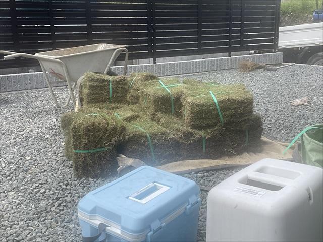 庭 芝生 費用