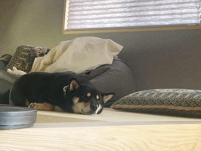 犬 フィラリア陽性 治療費