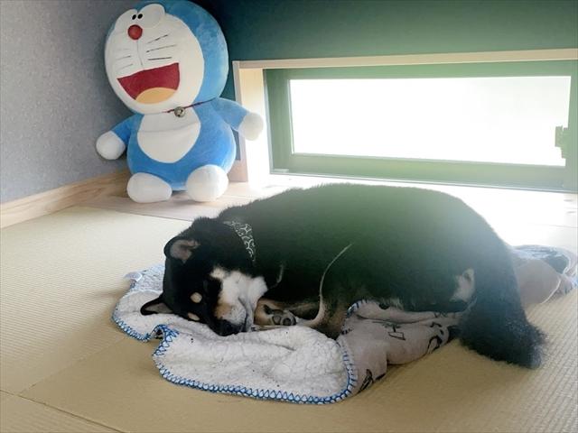 犬 フィラリア ボルバキア治療